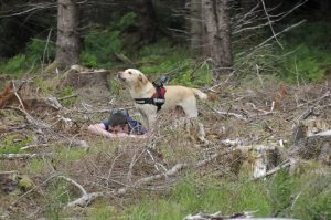 Search Dog Training